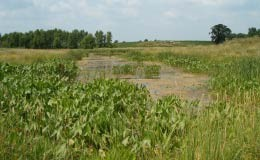 Wetland Determination and Wetland Delineation Services