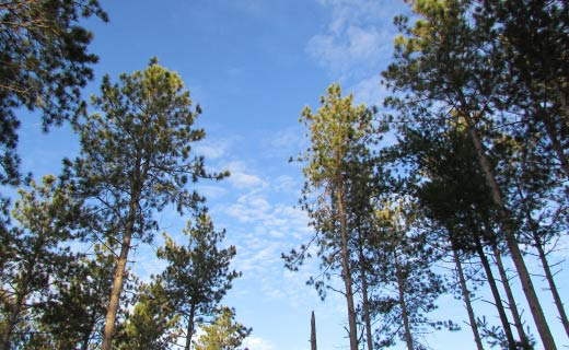 Environmental Impact Assessment Services for Forests and Wooded Areas
